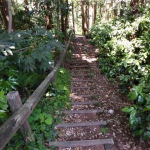 鎌倉中央公園を散歩
