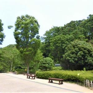 鎌倉中央公園のクワガタムシ