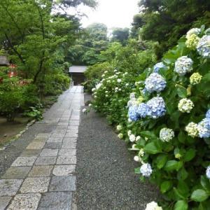 葛原丘神社の紫陽花と晴雨庵のラーメン