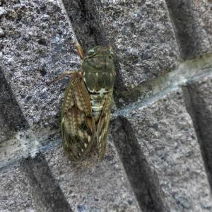 鎌倉中央公園で昆虫観察
