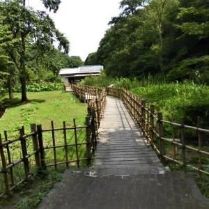 鎌倉中央公園で残念な事とスズメバチ
