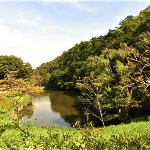 鎌倉中央公園で秋の生物観察