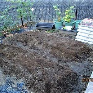 【プチ家庭菜園】秋じゃが定植してみました!
