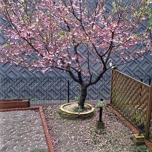 こなつ桜の後は 桃の花~♪