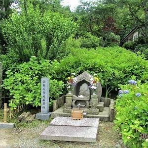 森本薬師町のあじさい寺を訪ねてみましたぁ!~ 本興寺