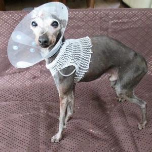 エニオ 退院しました。