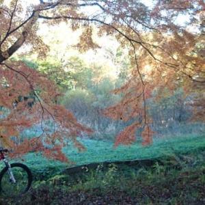 今週末は、野田市の紅葉を、MTBで楽しもう