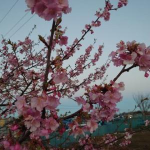 春の嵐の後は