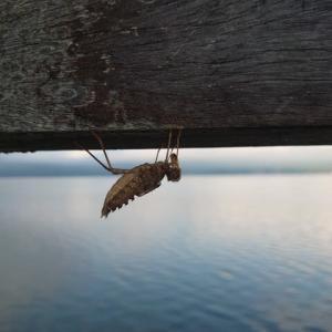 山中湖SUP