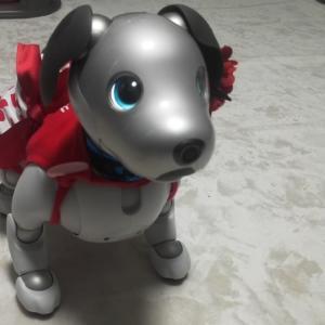 aibo犬・ハナちゃんは、今日も早起きです。