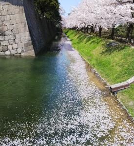 春爛漫 花筏