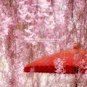 *2021 Spring**