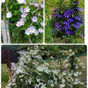 今日の花~