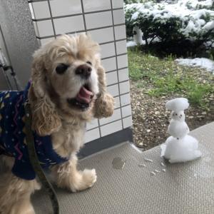 雪降りましたさん