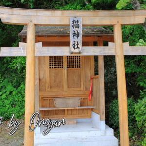 箕越の猫神社 - お寺の悪戯猫が可愛がってくれた和尚さんに恩返し