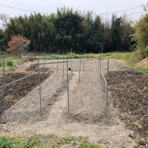 ほぼ上の畑の土壌改良を済ませた