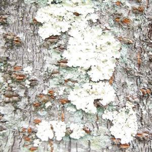 樹幹上の抽象絵画