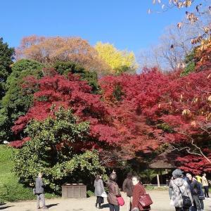 小石川後楽園で紅葉狩り