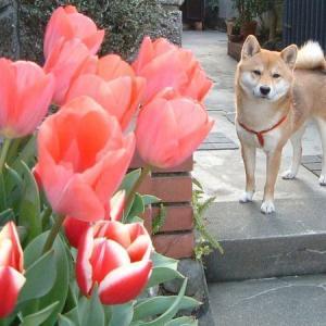 咲いた、さいた