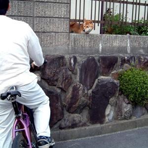 この自転車は?
