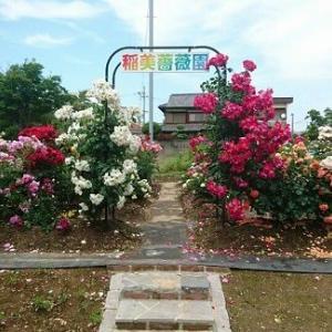 小さな薔薇園。