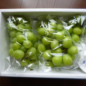 ふるさと納税 富士川町産シャインマスカット約2kg