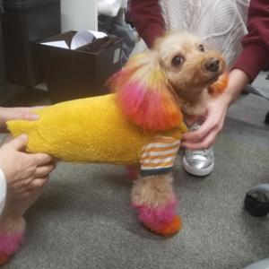 犬服教室 Sewing class