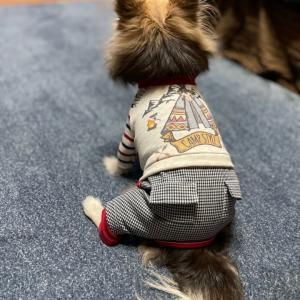 犬服講座 Sewing class