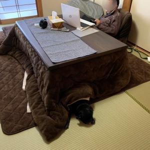 正しくコタツに入るヒグマのブヒブヒと可愛い寝息が聞こえてくるよ~