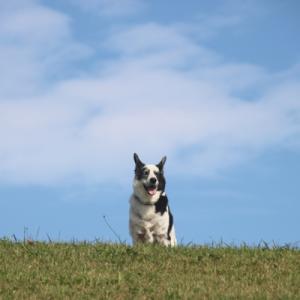 敬老犬の日