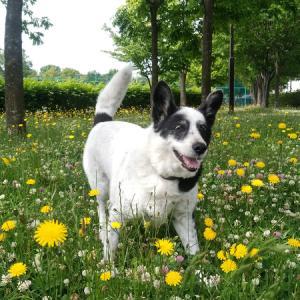 花と犬と代理散歩