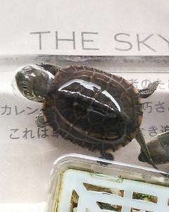 亀さん、名前が・・