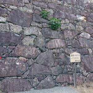 【158】転用石が石垣に残る明智光秀の福知山城。