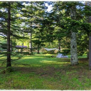 森に行ってカレーを喰らう ソロキャンプ