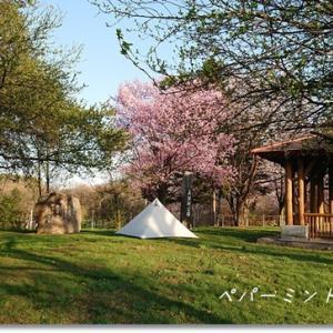 令和GW最終日 桜と白テントでソロキャンプ