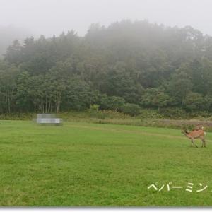 お気に入りのキャンプ場は鹿だらけ 厚岸・筑紫恋キャンプ場