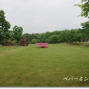 広々ふかふか緑の芝 心癒される穴場のキャンプ場