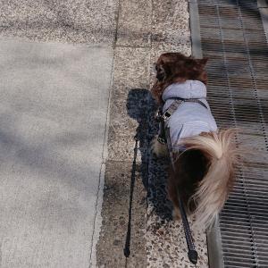 犬の散歩中にう〇こを踏んだ人から怒鳴られたお話。怖かった。
