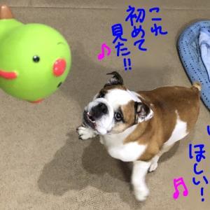 芋虫に夢中(^_^*)
