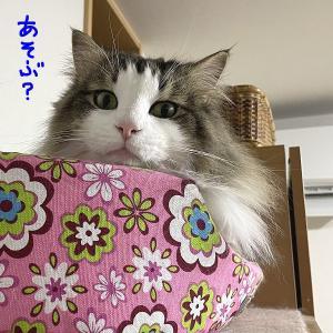 今日のたまちゃんはちょっぴり悪い子(^_^;)