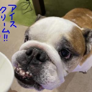 食欲減退か、ただの好き嫌いか?(^_^;)