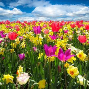 春らしいコーディネートをカンタンに作る方法