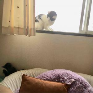 相変わらずの猫パンチ