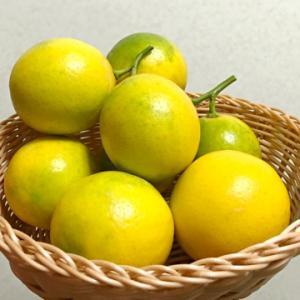 グランドレモンの収穫♪