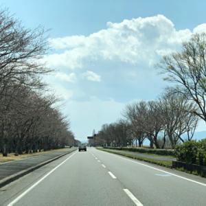 桜前線まだかな〜♪