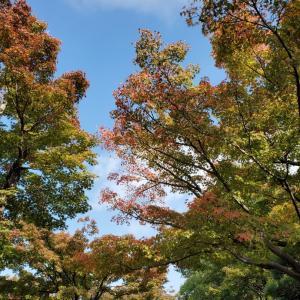 秋が寂しい