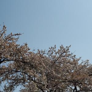 「桜はすきじゃない」という母~取り戻すべき力