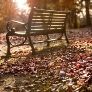 「秋が寂しい」と感じる人へ~秋に浮き彫りになるもの