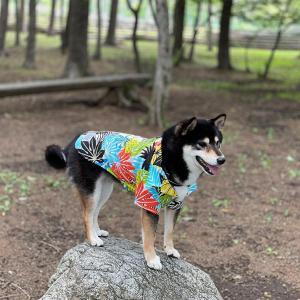 3歳の誕生日 日帰りドライブ in 山中湖 Vol.2(ドッグリゾートWoof(R)(ワフ)  - 琥大朗 - 黒柴犬 -