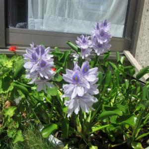 監督の家の植物、何の花でしょうか!